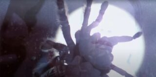 """Un fotogramma della morrte di Mirabella, ripreso in """"Spiderman"""""""