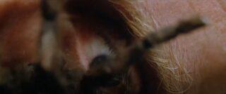 L'occhio di Mirabella, poco prima di essere divorato dai ragni